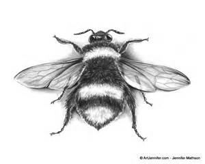 Bee Scientific Drawing