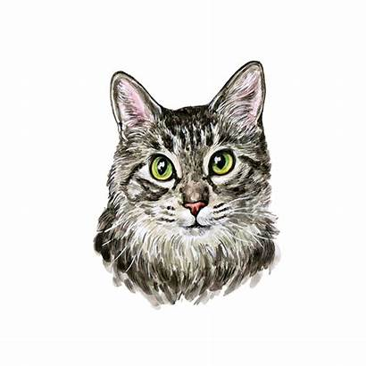 Cat Watercolor Transparent Painting Kitten Painted Clipart