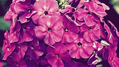 Floral Desktop Backgrounds Laptop Resolution Iphone Wallpapertag