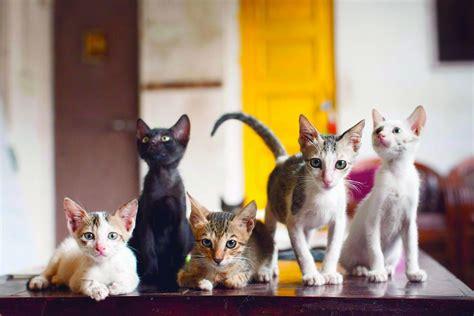 Cat Café Studio  India's First Cat Café  Open Everyday