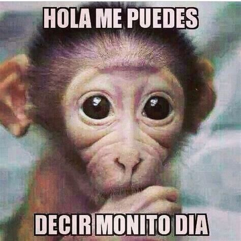Memes Graciosos - memes chistosos de animales www imgkid com the image kid has it