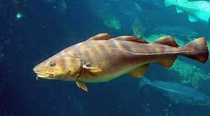 Dorsal dialect: Fish speak to each other in 'regional ...