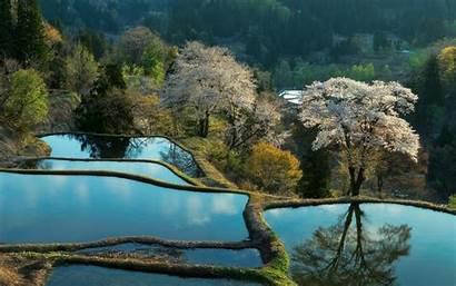 Pond Ponds Estanques Wallpapersafari Fondo Pantalla