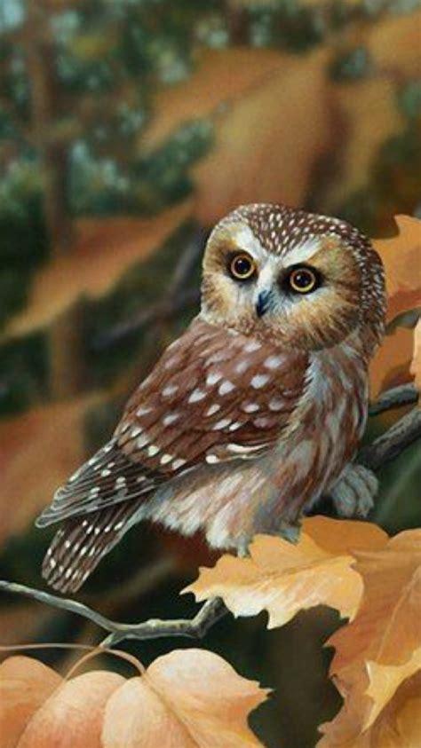 einheimische vögel bilder die 74 besten s 252 223 e eulen hintergrundbilder