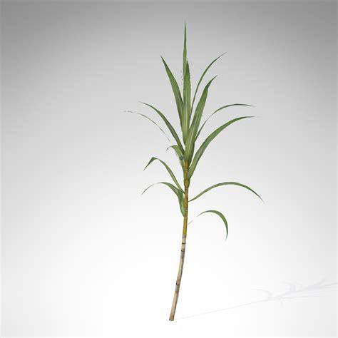 xfrogplants sugar cane  model max ds cd lwo lw lws ma