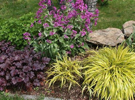 best hardy plants for borders 362 best images about bossenbroek back border design 2015 on pinterest kaleidoscopes shrubs