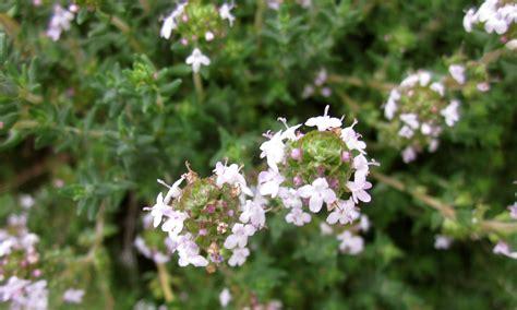 herb florist herb plants home herb gardens