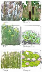 Plante Filtrante Pour Bassin : plantes filtrant l 39 eau pour le traitement en phyto puration 39 39 39 39 ecologs ~ Louise-bijoux.com Idées de Décoration