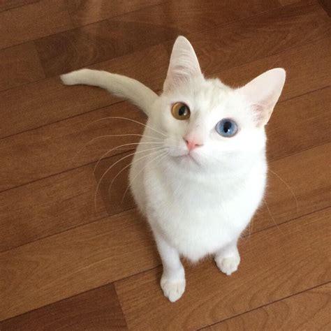 白 猫 みや ー こ
