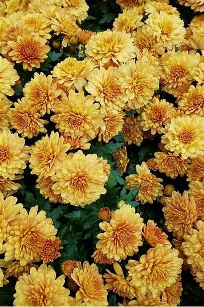Flowers Aesthetic Yellow Flower Dark April Hello