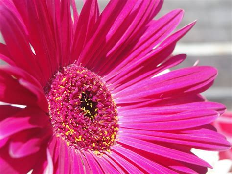 big flowers big flower pictures savingourboys info