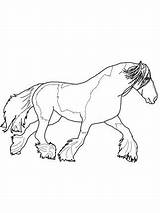 Coloring Horse Gypsy Shire Printable Vanner Horses Therapy Version Getcolorings Adult Printab Getdrawings Template sketch template