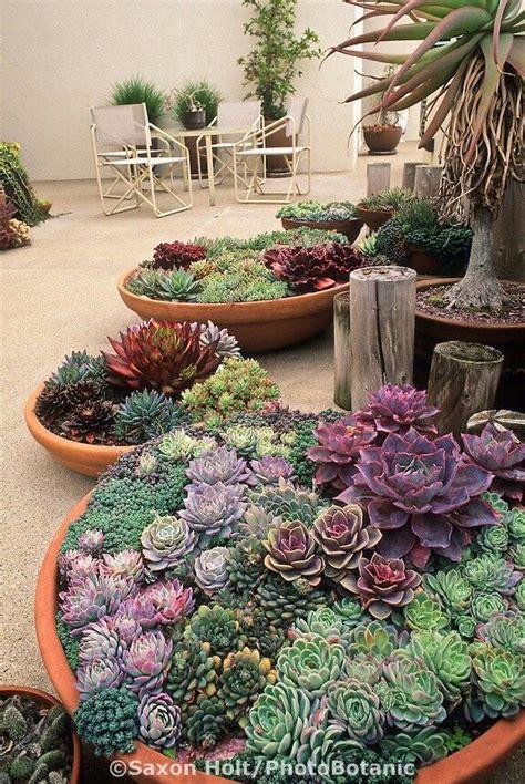 beautiful succulent gardens beautiful potted succulents garden pinterest gardens beautiful and my life