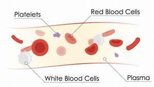 Platelet Rich Plasma Therapy  Prp
