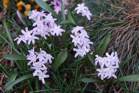 favorite blooming small bulbs gardening products