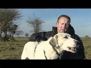 Afghan Kuchi / Koochie Dog | Doovi