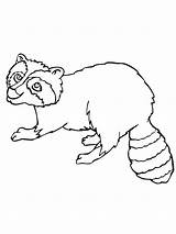 Raccoon Coloring Pages Printable Popular Bestcoloringpagesforkids Bag sketch template