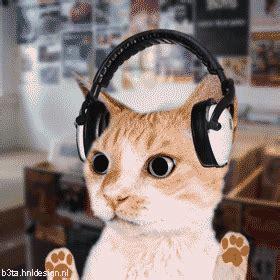 cat  disco  gifs  izismilecom