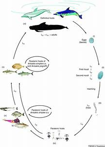 bottlenose dolphin cycle diagram - 28 images - pin dolphin ...