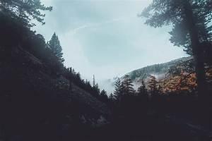 Forest, Foogy, Mist, Pine, Trees, Woods, Hd, Nature, 4k