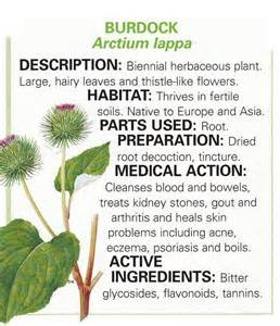 Burdock root - Healthy eating! - Pinterest Chromium