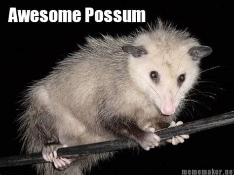 Possum Memes - mememaker net awesome possum everything else pinterest