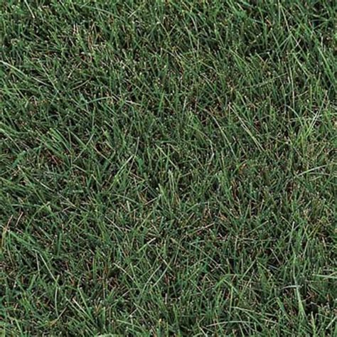types of fescue grass family tree and turf care grass types