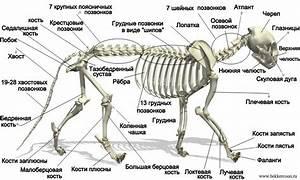 От чего болят все кости и суставы