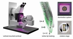 Live Tracking Of Moving Samples In Confocal Microscopy For