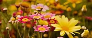 Wildflower Seed Mixes Pennington