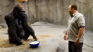 Zookeeper - Kevin James and a guy in a gorilla suit | Film ...