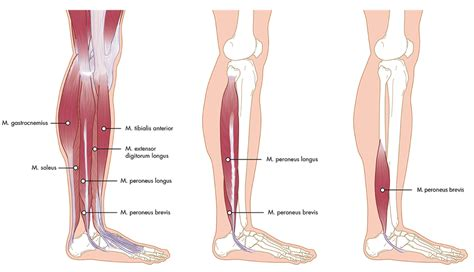 Knieholte, pijn, in, knieholte, pijn, achterkant Knie