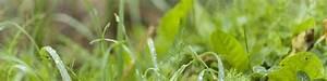 Optimale Luftfeuchtigkeit Im Haus : elektrosmog luftfeuchtigkeit gesund wohnen im vollholzhaus ~ Markanthonyermac.com Haus und Dekorationen