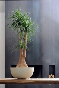 Bäume Für Drinnen : b ume f r alle baum plaetzchen und zimmerpflanzen ~ Michelbontemps.com Haus und Dekorationen