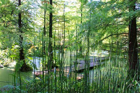 Botanischer Garten Bochum botanischer garten bochum foto bild landschaft garten