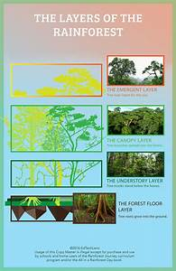 Links To Worksheets And Study Guide All In A Rainforest Day