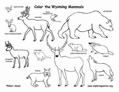 Mammals Coloring Wyoming State Reptiles Birds Exploringnature