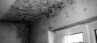 Muffe Sui Muri Interni - muffe sui muri ecco come ho risolto il problema a casa di