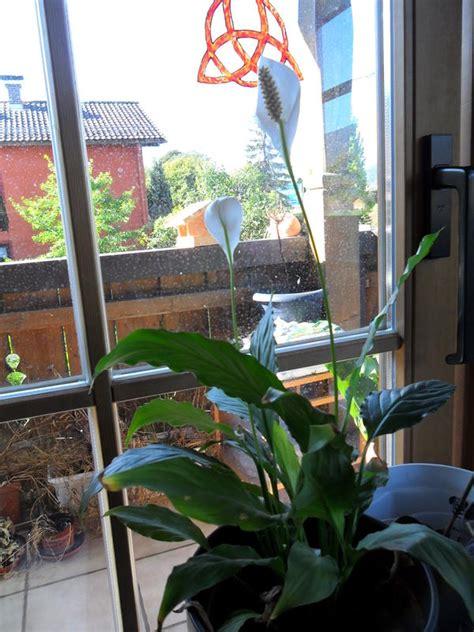welche pflanzen sind das und sind sie giftig katzen forum