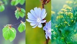 Pflanzen Bestimmen Und Blumen Bestimmen Mit Diesen Apps