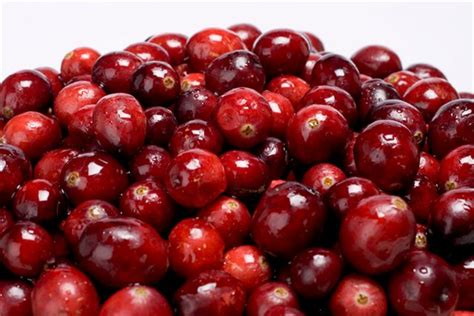 how to cranberries cranberries urinary tract infections cranberry marketing committee