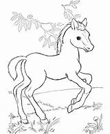 Coloring Horse Pages Herd Wild Realistic Printable Getcolorings sketch template