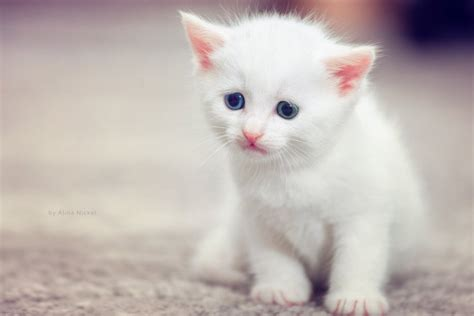 Cute Cats Hd Wallpapers