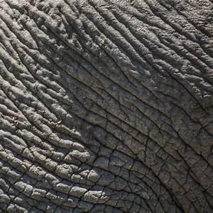 Elefantenhaut Auf Putz : elefantenhaut nat rliche strukturen 18 foto bild natur formen haut bilder auf ~ Yasmunasinghe.com Haus und Dekorationen