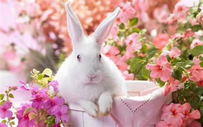 Rabbit Wallpapers Android Google Play 1920a Apps