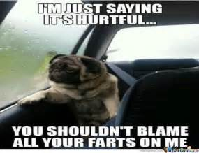 Sad Birthday Dog Meme