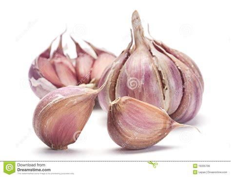 is garlic a vegetable garlic vegetable royalty free stock image image 16335706