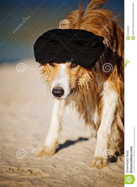 cool dog   cap   beach stock photography image