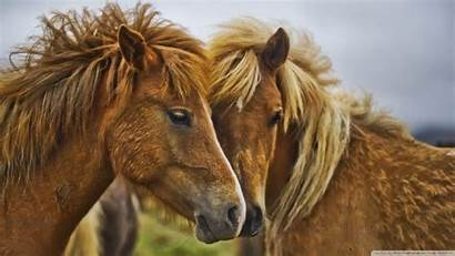 Horses Wallpapers Horse