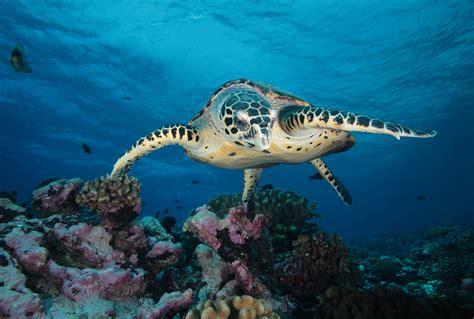 Scuba Diving in Tahiti | Resorts & Packages | Caradonna ...